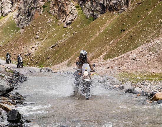 Royal Himalayan prueba
